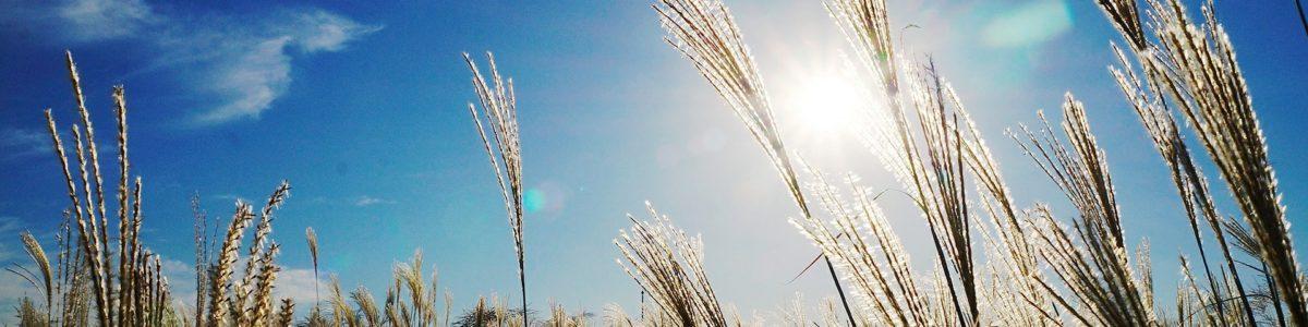 © pixabay / yunjeong / CC0